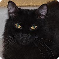 Adopt A Pet :: Louie - Glendale, AZ