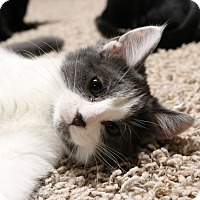 Adopt A Pet :: Madison - Rochester, MN