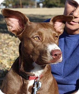 Terrier (Unknown Type, Medium) Mix Dog for adoption in Owasso, Oklahoma - Leslie