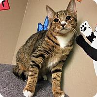 Adopt A Pet :: Bobbie - Tempe, AZ