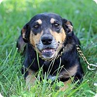 Adopt A Pet :: Allie - Waldorf, MD