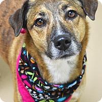 Adopt A Pet :: Chloe - Dublin, CA
