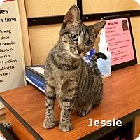 Adopt A Pet :: Jessie - Brandon, FL