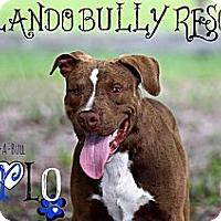 Adopt A Pet :: Harlo - Orlando, FL