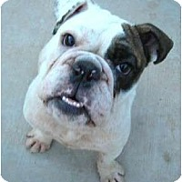 Adopt A Pet :: Mikey**adoption pending** - Gilbert, AZ