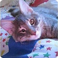 Adopt A Pet :: Porthos - Davis, CA