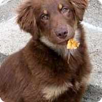 Adopt A Pet :: Addie(ADOPTED!) - Chicago, IL