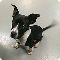 Adopt A Pet :: Cooper - Berlin, CT