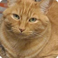 Adopt A Pet :: Leo - Quail Valley, CA
