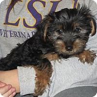 Adopt A Pet :: Thurman - Greenville, RI