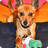 Adopt A Pet :: Ellie - Marietta, GA