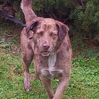 Australian Shepherd Mix Dog for adoption in Coal City, West Virginia - Chance