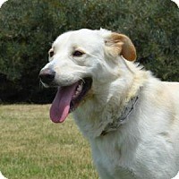 Adopt A Pet :: Druid - San Diego, CA