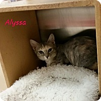 Adopt A Pet :: Alyssa - McDonough, GA