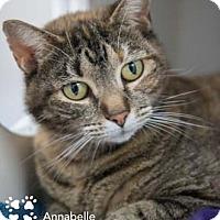 Adopt A Pet :: Annabelle - Merrifield, VA