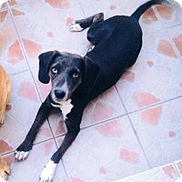 Adopt A Pet :: Megan - San Diego, CA