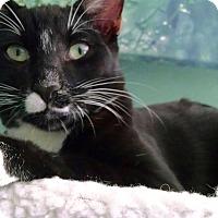 Adopt A Pet :: Oscar - Colmar, PA