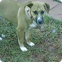 Adopt A Pet :: Molly - West Hartford, CT