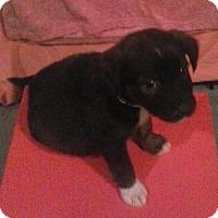 Adopt A Pet :: Olga - Aurora, CO
