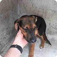 Adopt A Pet :: GAGE (DG) - Tampa, FL