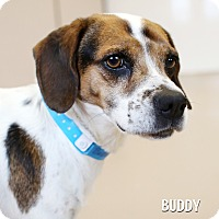 Adopt A Pet :: Buddy *REBOUND* - Appleton, WI