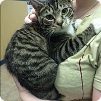 Adopt A Pet :: Christina Aguilera - Richboro, PA
