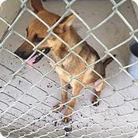 Adopt A Pet :: Kong - Waycross, GA