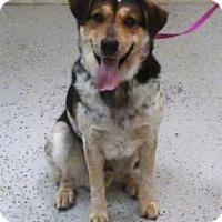 Adopt A Pet :: Pup - Avon, NY