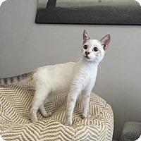Adopt A Pet :: LOGAN - Lakewood, CA