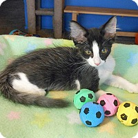 Adopt A Pet :: Barry - Glendale, AZ