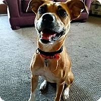 Adopt A Pet :: Mirage - Tomah, WI