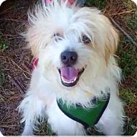 Adopt A Pet :: Bernie!!! Video! - Los Angeles, CA