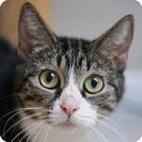 Adopt A Pet :: Rosalie - Medford, MA