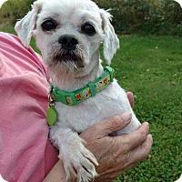 Adopt A Pet :: Seymour - Ashland, WI