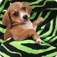 Adopt A Pet :: AM2 - Orland Park, IL