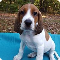 Adopt A Pet :: Miami Sebastian - Alexandria, VA