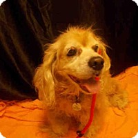 Adopt A Pet :: SANDI - Upper Marlboro, MD