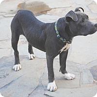 Adopt A Pet :: Macy Gray - Spring, TX