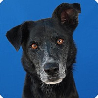Adopt A Pet :: Ethel - Pagosa Springs, CO