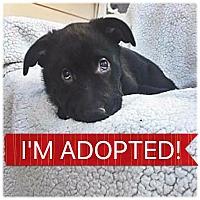 Adopt A Pet :: Onyx - Regina, SK