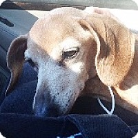 Adopt A Pet :: Harriet Quimby - Houston, TX