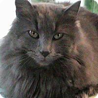 Adopt A Pet :: Portia - Maynardville, TN