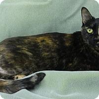 Adopt A Pet :: Eva - Olive Branch, MS