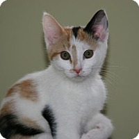 Adopt A Pet :: Sara - Philadelphia, PA