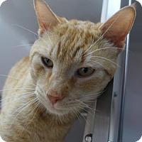 Adopt A Pet :: Scott - Batavia, NY