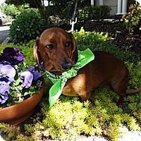 Adopt A Pet :: RODLEY - Portland, OR
