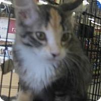 Adopt A Pet :: Katrina - Dallas, TX