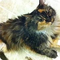 Adopt A Pet :: Danifae - Sacramento, CA