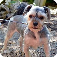 Adopt A Pet :: Maddie - Miami, FL