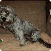 Adopt A Pet :: Megan - Phoenix, AZ